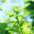 写真: やさしい緑