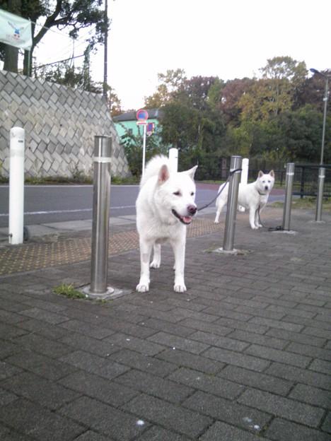 写真: 城北公園早朝。ヒートイン前...