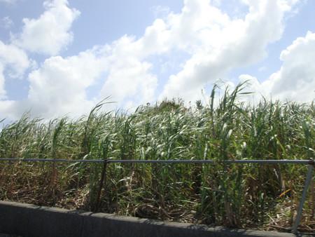 沖縄へ出発 (3)