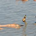 写真: 死海でビール飲みながら浮かぶ編。塩分30%なので自然に浮きます