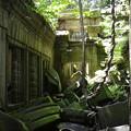 写真: ベンメリア遺跡10