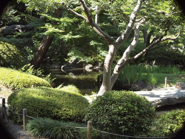 旧古河庭園内の和風の雰囲気漂う庭園 by Macro Switar 26mm F1.1
