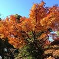 Photos: 白林寺 - 5