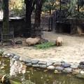 写真: 東山動植物園:生まれたばかりのカピバラの赤ちゃんとその両親 - 2