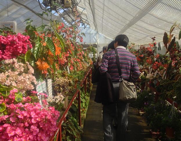 名古屋市農業センター:しだれ梅まつり - 060