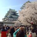 写真: 名古屋城春まつり - 056