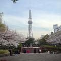 写真: 久屋大通公園の桜 - 06