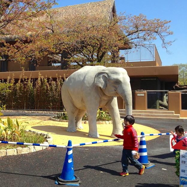 東山動植物園:新アジアゾウ舎前に設置された象の像 - 1