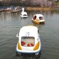Photos: 庄内緑地公園 - 060:ボート池のスワンボート