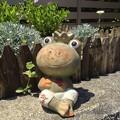 写真: 可愛いカエルの陶像 - 1
