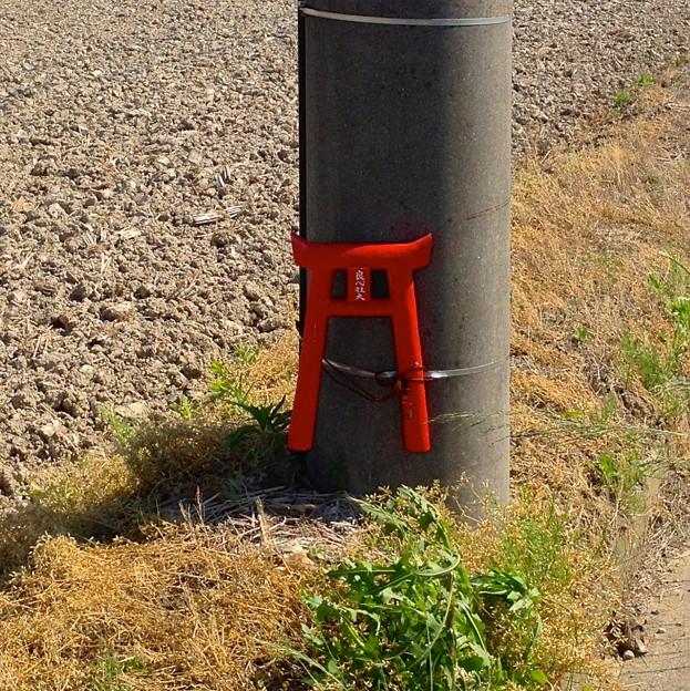 写真: ゴミのポイ捨て防止用と思われるミニ鳥居が電信柱に! - 2