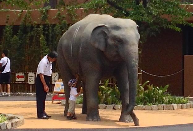 新アジアゾウ舎前の象の像で戯れる祖父と孫(?)