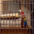 東山動植物園バードホール:アカコンゴウインコ - 2