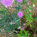 近所で見かけた紫色の丸い変わった花 - 2