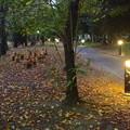 写真: ふれあい緑道の埴輪 - 01