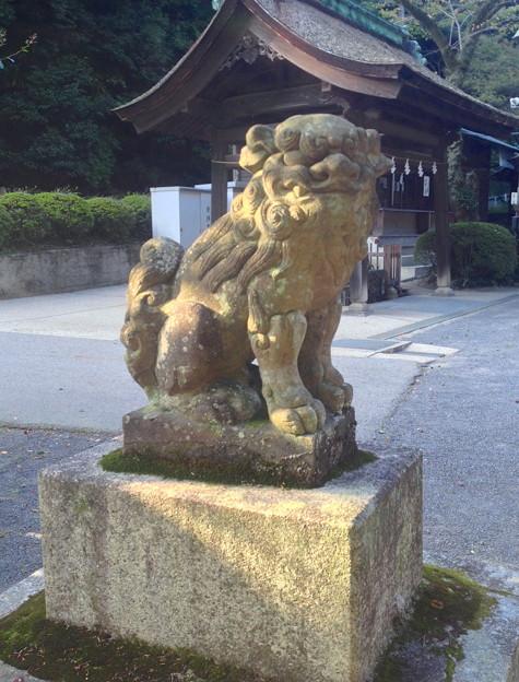 内々神社:狛犬 - 1
