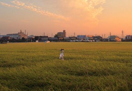 綺麗な夕焼け空と雲、そして案山子(かかし) - 2
