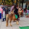 JCフェスティバル 2013 No - 28:動物ふれあい体験コーナー(ポニー)