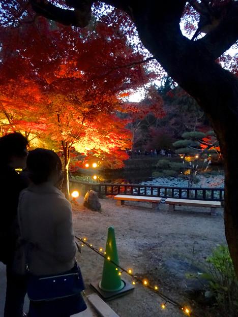 写真: 東山植物園 紅葉ライトアップ 2013 No - 018