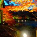 写真: 東山植物園 紅葉ライトアップ 2013 No - 020