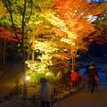 写真: 東山植物園 紅葉ライトアップ 2013 No - 034