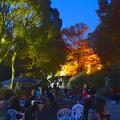 写真: 東山植物園 紅葉ライトアップ 2013 No - 037
