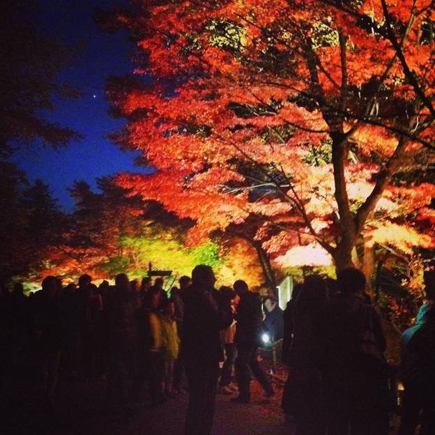 写真: 東山植物園 紅葉ライトアップ 2013 No - 060