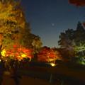 写真: 東山植物園 紅葉ライトアップ 2013 No - 068:紅葉と金星