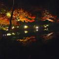 写真: 東山植物園 紅葉ライトアップ 2013 No - 069