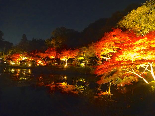 東山植物園 紅葉ライトアップ 2013 No - 070
