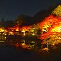 写真: 東山植物園 紅葉ライトアップ 2013 No - 070