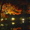 写真: 東山植物園 紅葉ライトアップ 2013 No - 071
