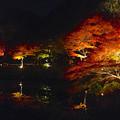 写真: 東山植物園 紅葉ライトアップ 2013 No - 074