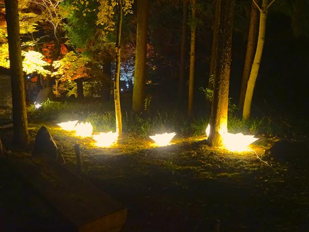 東山植物園 紅葉ライトアップ 2013 No - 110:花のイルミネーション