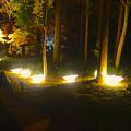写真: 東山植物園 紅葉ライトアップ 2013 No - 110:花のイルミネーション