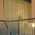 写真: 東山動植物園 No - 123:ガーデンテラス東山の結婚式用(?)ホールの扉