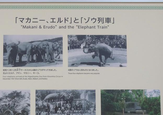 新アジアゾウ舎「ゾージアム」No - 003:「マカニー、エルド」と「ゾウ列車」