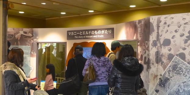 新アジアゾウ舎「ゾージアム」No - 011