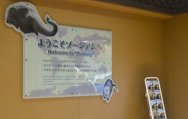 新アジアゾウ舎「ゾージアム」No - 013