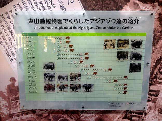 新アジアゾウ舎「ゾージアム」No - 017