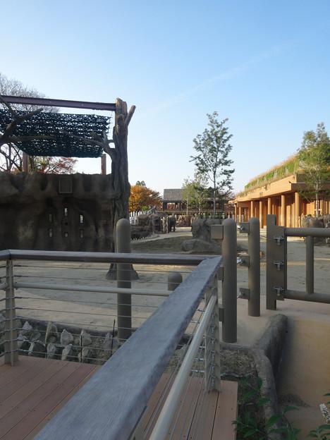 新アジアゾウ舎「ゾージアム」No - 079