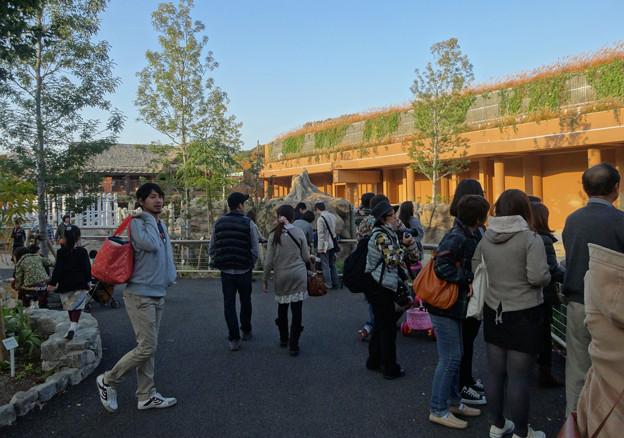 新アジアゾウ舎「ゾージアム」No - 092