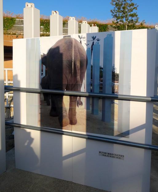 新旧アジアゾウ舎を繋ぐ、象移動用のルート - 11