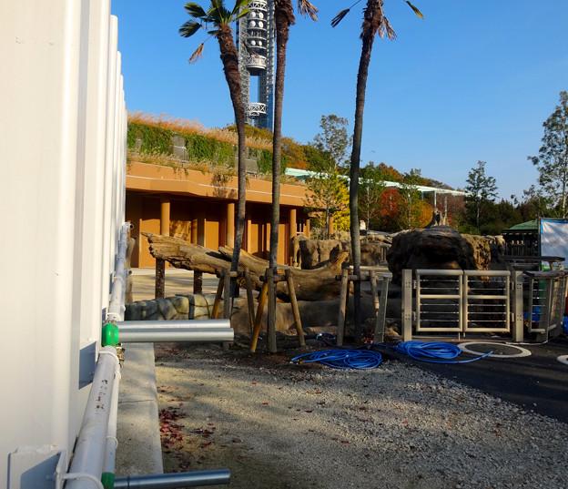 新旧アジアゾウ舎を繋ぐ、象移動用のルート - 12