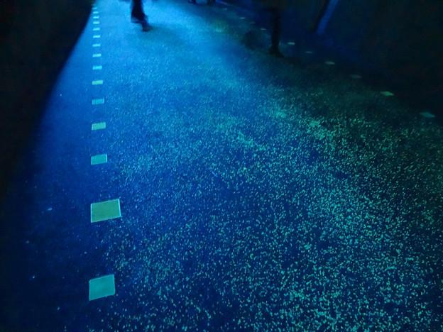 写真: 東山動植物園 星が丘門の畜光ライトアップ No - 6