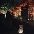 Photos: 東山植物園 紅葉ライトアップ 2013 最終日 No - 14