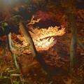 写真: 東山植物園 紅葉ライトアップ 2013 最終日 No - 20