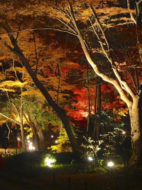 東山植物園 紅葉ライトアップ 2013 最終日 No - 26
