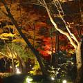 写真: 東山植物園 紅葉ライトアップ 2013 最終日 No - 26