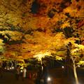 写真: 東山植物園 紅葉ライトアップ 2013 最終日 No - 30